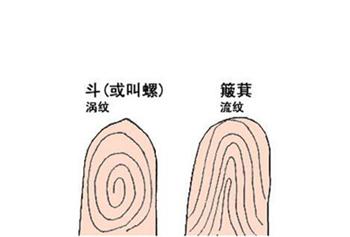 指纹算命,指纹算命图解,十指指纹算命