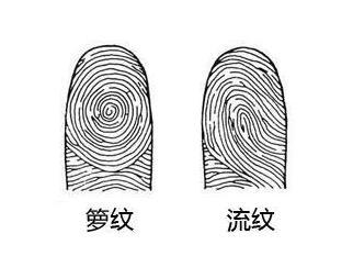 手上指纹,手上指纹运势