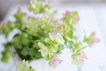 客厅养植物的风水原则
