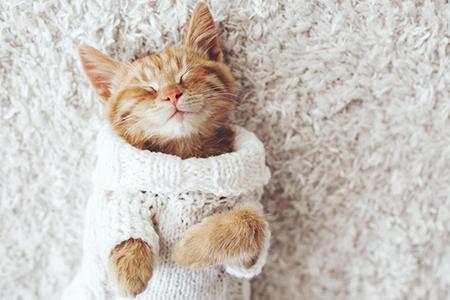 猫,猫进家门风水